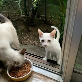真っ白な仔猫