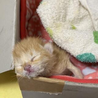 生まれたての子猫を助けて下さい!