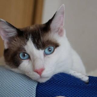 青い瞳が美しい〝なな太郎〟君です♪