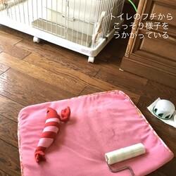 お布団の掃除