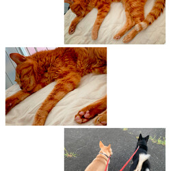 猫のナイト