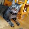 猛暑のため開催中止【相模大野駅前北口デッキ】♪猫の譲渡会♪