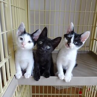 淡路島から50匹の猫たちの里親募集