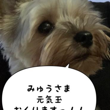 みゅうさま!!!元気玉送ります!!!