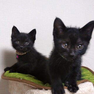 1ヶ月半の黒猫ボーイズ