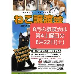 予約制)8/22猫譲渡会のお知らせ