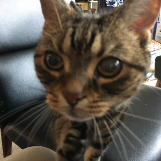 16歳のおばあちゃん猫