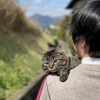 長毛の母猫 はるちゃん
