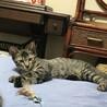 おっとりマイペースの子猫ちゃん サムネイル2