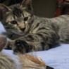 おっとりマイペースの子猫ちゃん サムネイル4