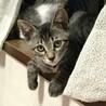 おっとりマイペースの子猫ちゃん サムネイル5