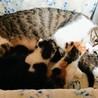 一時停止中子猫の里親さん募集