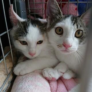 可愛い仲良し兄妹!ネオ(♂️)&ミカ(♀)