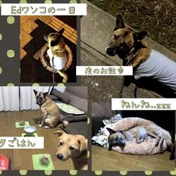 「元野犬Edワンコの一日」サムネイル3