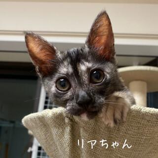 【8/16譲渡会】甘えん坊で可愛い・リアちゃん
