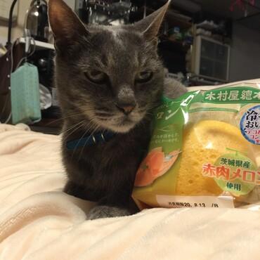 p(^_^)q みゅう兄貴!メロン味の元気玉送ります!!僕は元気、今日は鯖のごま油焼きだったよ〜