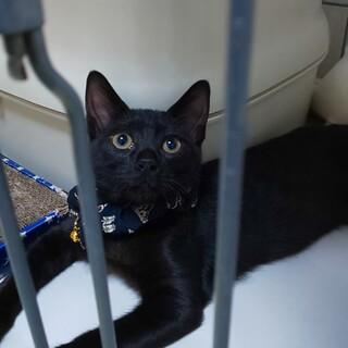とても綺麗な黒猫兄妹