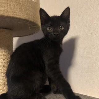 元気でちょっとシャイな黒猫の男の子です。