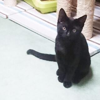 まん丸目で可愛らしい黒猫ちゃん