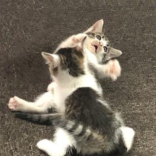 2匹の子猫 東北地方