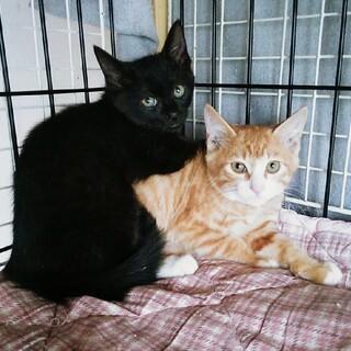 愛らしい兄妹子猫