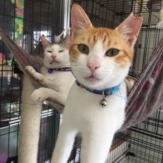 近隣住民から嫌がらせをされた子猫