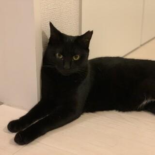 ☆美形黒猫!おっとりさんのぷー☆♀