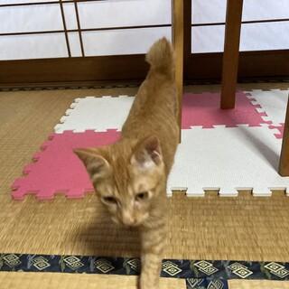 家猫メリーちゃんの娘