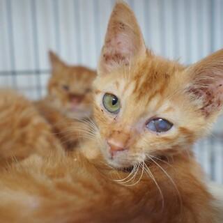 【ちゅりっぴ】大変な環境から救出されたスリゴロ子猫