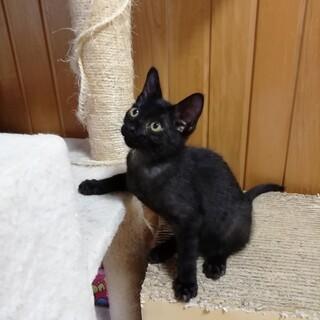 可愛い黒猫赤ちゃん【わかめだよ♪】