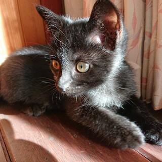 人懐こい!元気な黒猫ちゃん♂