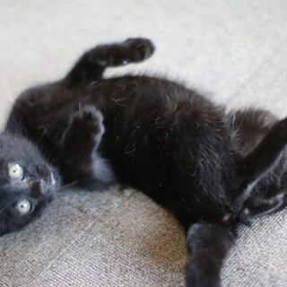 2か月半人が大好きな黒猫さん