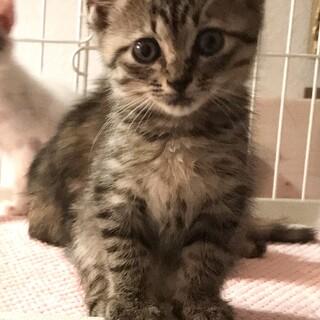 可愛い子猫ちゃん里親さん募集中