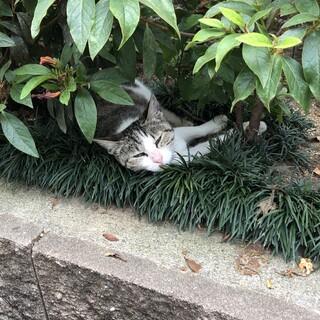 これからの猫生はのんびりと暮らせる場所で