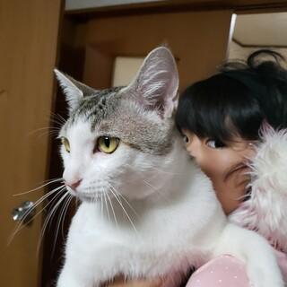 里親募集✨人間大好きな猫ちゃん❤️