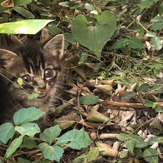 子猫 生後1ヶ月未満 家の前に捨てられていました。