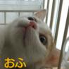 かわいい~(^-^) おふたんだよー(=^ェ^=)