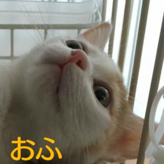 かわいい~(^-^)おふたんだよ(=^ェ^=)