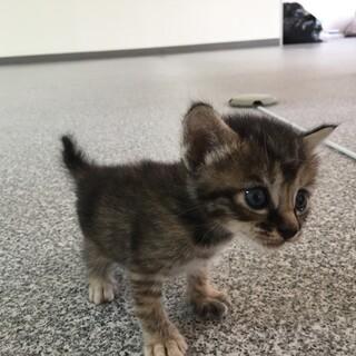 生後1ヶ月仔猫ちゃん
