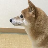 小豆(こまめ)}