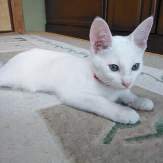 可愛い〰白猫の男の子
