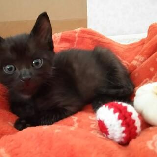 生後1か月小さな甘えん坊子猫です
