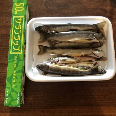川魚も釣ります
