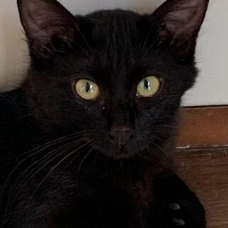 真っ黒な可愛い子猫