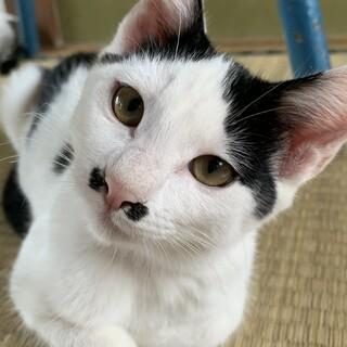 鼻周りの模様が個性的な猫ちゃん