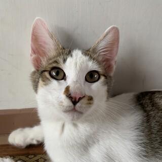 イケメン子猫