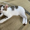 イケメン子猫 サムネイル2