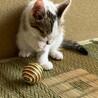 イケメン子猫 サムネイル6