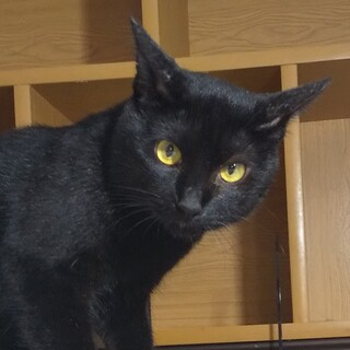 【多頭崩壊レスキュー】控えめで小柄な黒猫