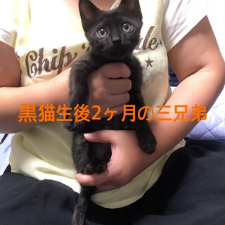 生後2ヶ月の黒猫ちゃん
